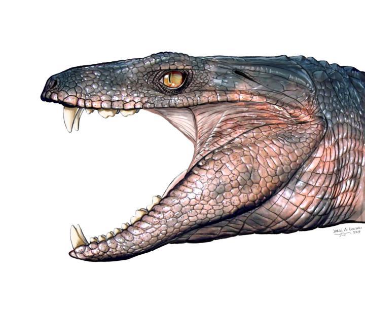 01_croc_pakasuchus.adapt.1900.1.jpg