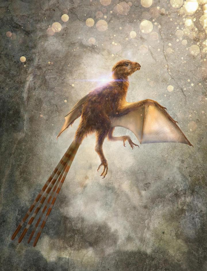 01-ambopteryx.adapt.1900.1.jpg